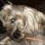 Zdjęcie profilowe Zuza lava