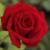 Zdjęcie profilowe kwiatek