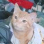 Zdjęcie profilowe Pudi