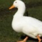 Zdjęcie profilowe OlaXD