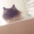 Zdjęcie profilowe Święta Adrianna z Kamionek