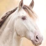 Zdjęcie profilowe Werka